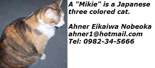 mikie-a-three-colored-japanese-cat.jpg